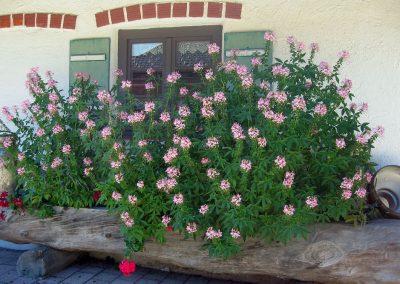 Blumenschmuck an der Doagl Alm