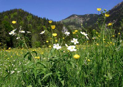 ...umgeben von saftig grünen, duftenden Almwiesen.