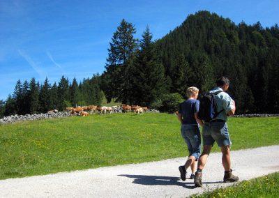 Zu Fuß erreicht man die Doagl Alm ab dem Wanderparkplatz Spatenau in etwa einer dreiviertel Stunde.